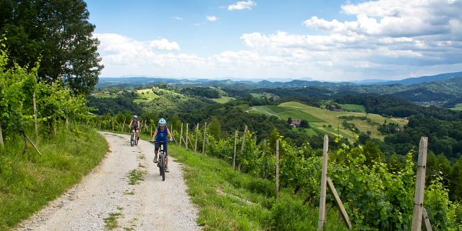 3 - Kungota cycling path