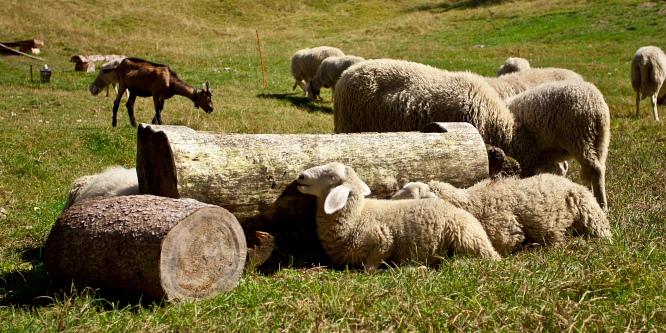 5 - Vogar alpine meadow