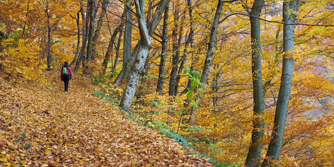 3 - Bistriški Vintgar Gorge