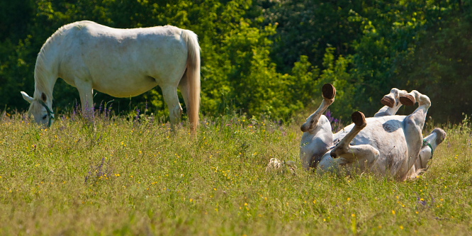 3 - Kobilarna Lipica
