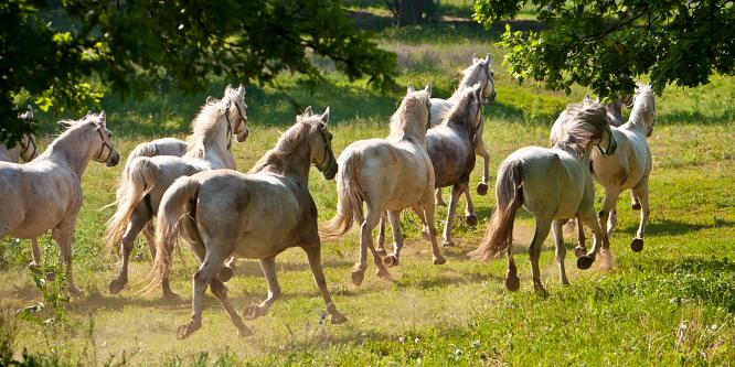 2 - Kobilarna Lipica