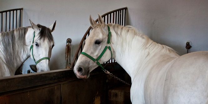 5 - Kobilarna Lipica