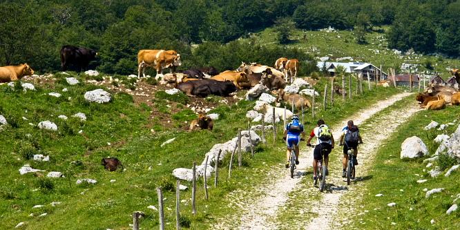 2 - Okoli Polovnika - planini Zaprikraj in Golobar