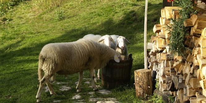 5 - Pastirska koča Jezersko