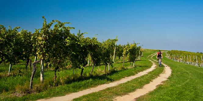 3 - Ljutomer and Jeruzalem - Through the endless vineyards