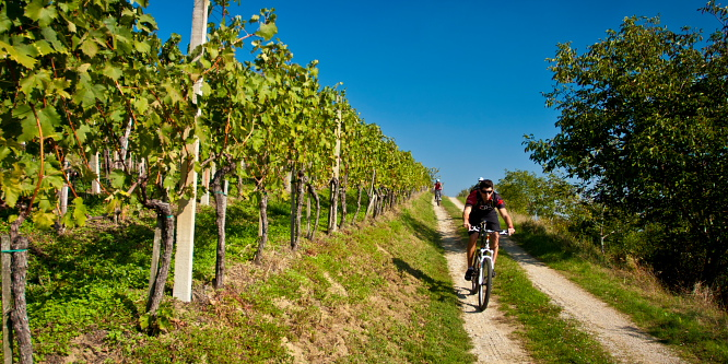 4 - Ljutomer and Jeruzalem - Through the endless vineyards