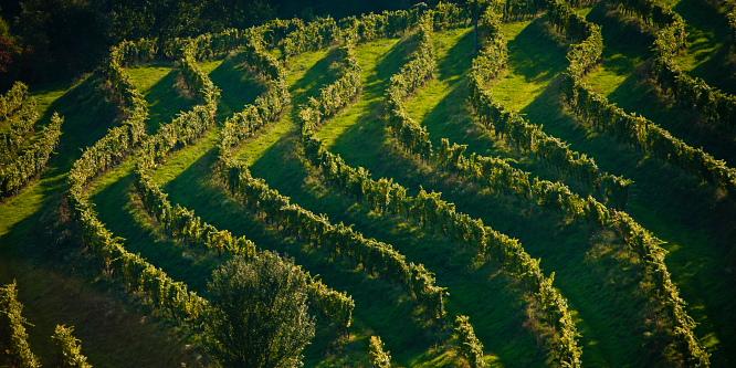 1 - Ljutomer and Jeruzalem - Through the endless vineyards