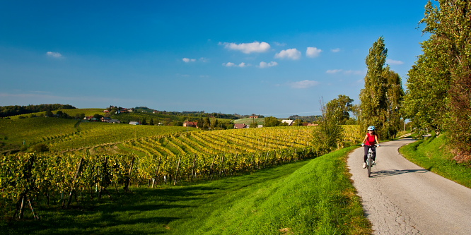 5 - Ljutomer and Jeruzalem - Through the endless vineyards