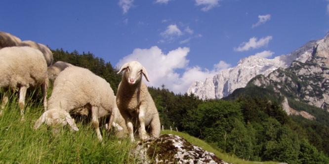 6 - Turistična kmetija Makek