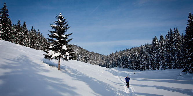 1 - Alpine meadows of Pokljuka - Uskovnica and Zajamniki