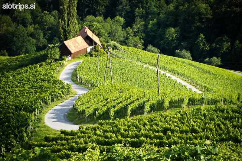 vineyards maribor slovenia