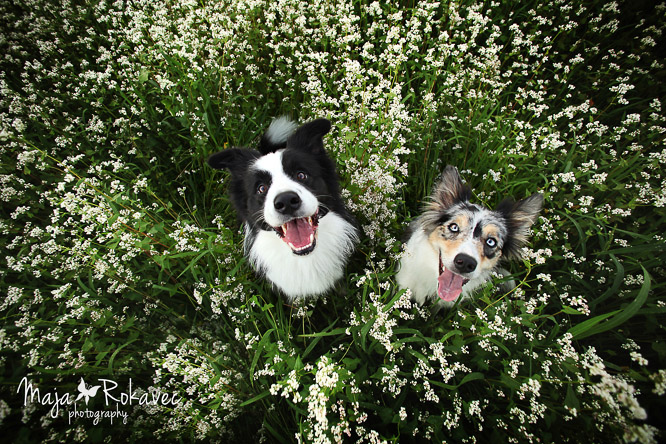 slovenia dogs