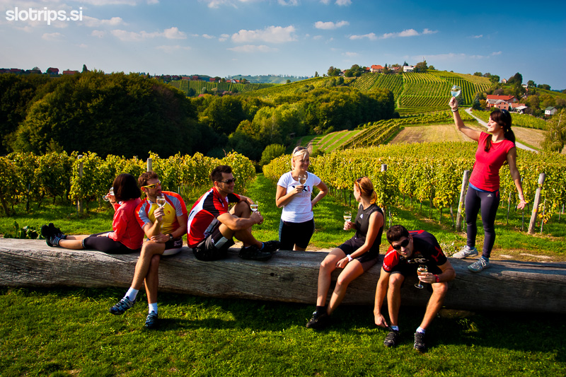 slovenia wine region jeruzalem cycling