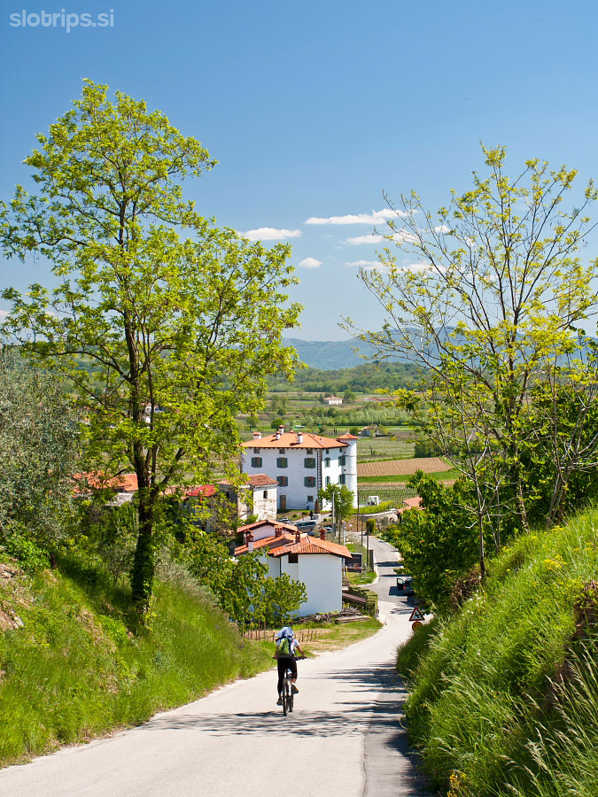 slovenia wine region goriska brda cycling