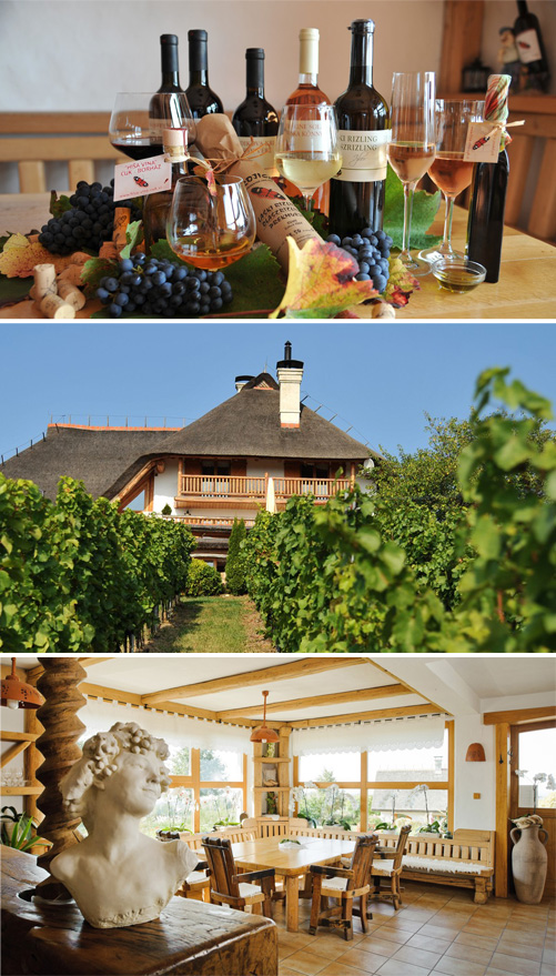 wine farmstay cuk slovenia