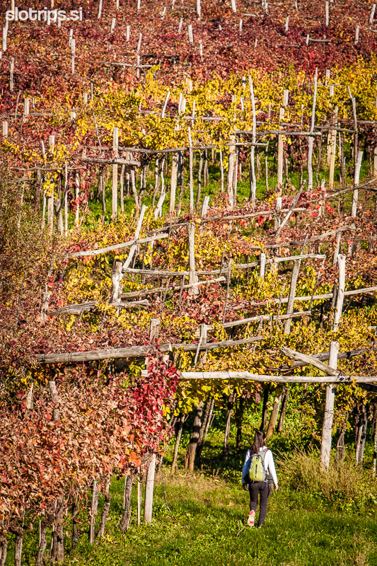 karst vineyards slovenia hiking