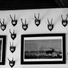 9-Hunting trophies