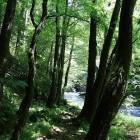 10-Pot ob reki Rak