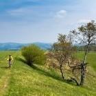 7-Grassy cart road