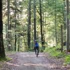 11-Obširni gozdovi