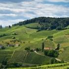 12-Geometrija vinogradov