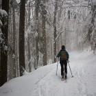 3-Blegoš - Zimski gozd