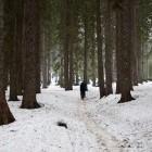 3-Začetek po gozdu proti planini Lipanca