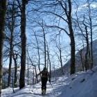 4-Vzpon na Komno poteka po gozdu