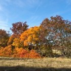 5-Jesen na Krasu