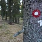 5-V gozdu