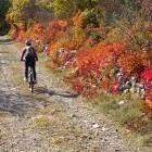 15-Jesen na Krasu