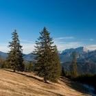 31-Zopet na planini Kofce