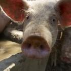 21-Živali na kmetiji