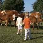 22-Živali na kmetiji