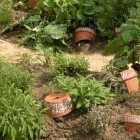 17-Zeliščni vrt