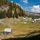 13-Planina Viševnik pod Pršivcem