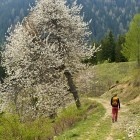 24-Peca - Travniki nad Toplo