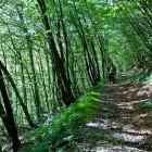 3-Blegoš - Vzpon skozi gozd