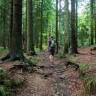 6-Blegoš - Ascent through the forest