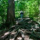 3-V gozdu nad Golnikom