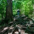 3-In the forest above Golnik village