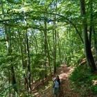4-In the forest above Golnik village