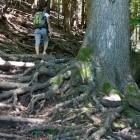 5-Nad zaselkom Gozd proti Kriški gori