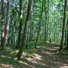 15-Descent towards Golnik village
