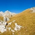 12-Tik pod vrhom Prevalskega Stoga