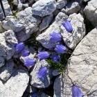 38-Mountain flowers