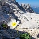 39-Mountain flowers