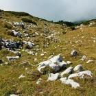24-Struška - Spust po brezpotju proti Belski planini