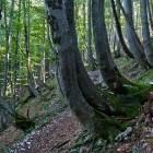 4-Struška - Oblike narave v Medjem dolu