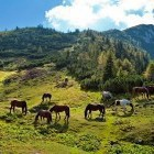 7-Struška - Planina Seča